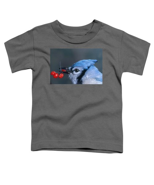 Blue Jay Toddler T-Shirt by Photo Researchers, Inc.