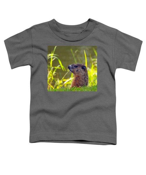 Chucky Woodchuck Toddler T-Shirt by Paul Ward