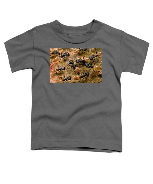 Ant Crematogaster Sp Group Toddler T-Shirt by Mark Moffett