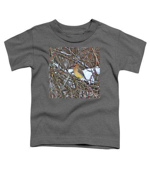 Cedar Wax Wing Toddler T-Shirt by Robert Pearson