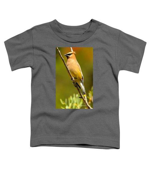 Cedar Waxwing Toddler T-Shirt by Adam Jewell