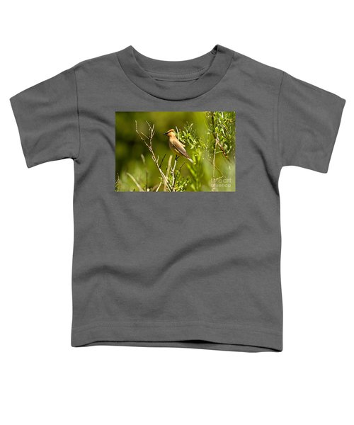 Cedar Waxwing At Glacier Toddler T-Shirt by Adam Jewell