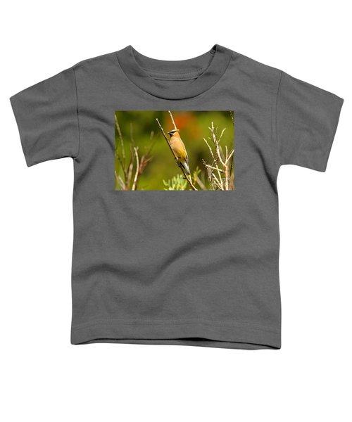 Fishercap Cedar Waxwing Toddler T-Shirt by Adam Jewell