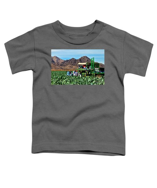 Harvesting Broccoli Toddler T-Shirt by Robert Bales