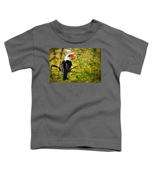 Male Von Der Decken's Hornbill Toddler T-Shirt by Adam Romanowicz