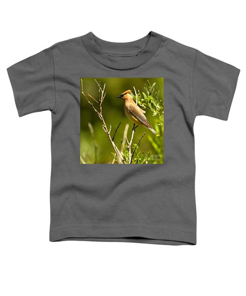 Perfectly Perched Toddler T-Shirt by Adam Jewell