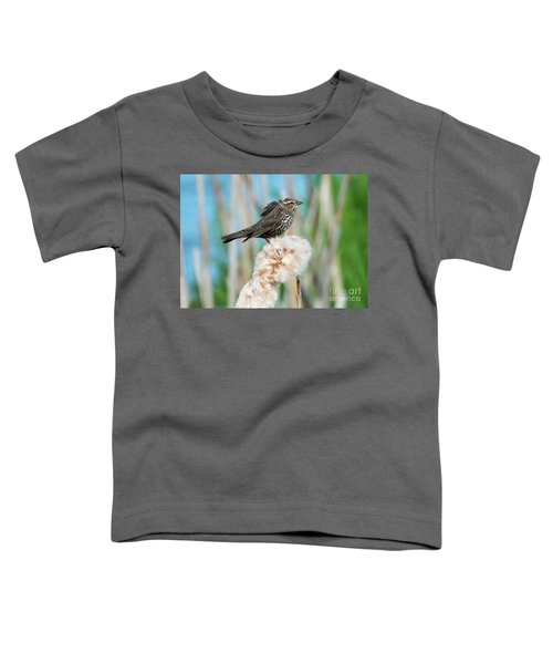 Ruffled Feathers Toddler T-Shirt by Mike Dawson