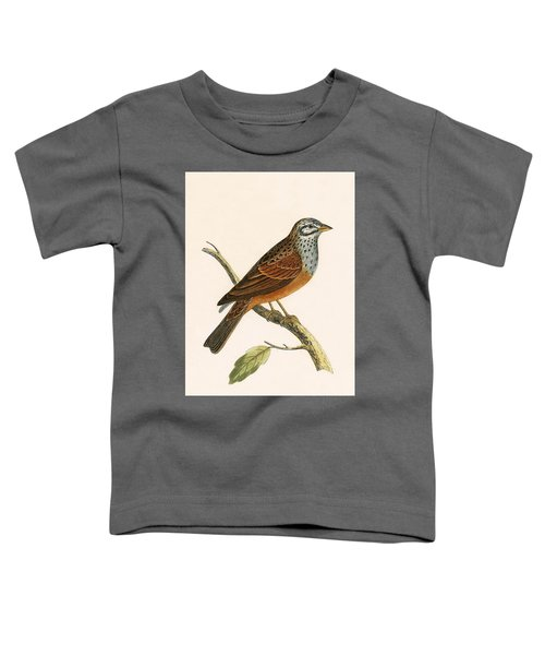 Striolated Bunting Toddler T-Shirt by English School