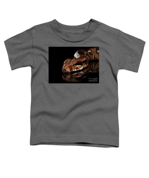 The Boa Constrictors, Isolated On Black Background Toddler T-Shirt by Sergey Taran
