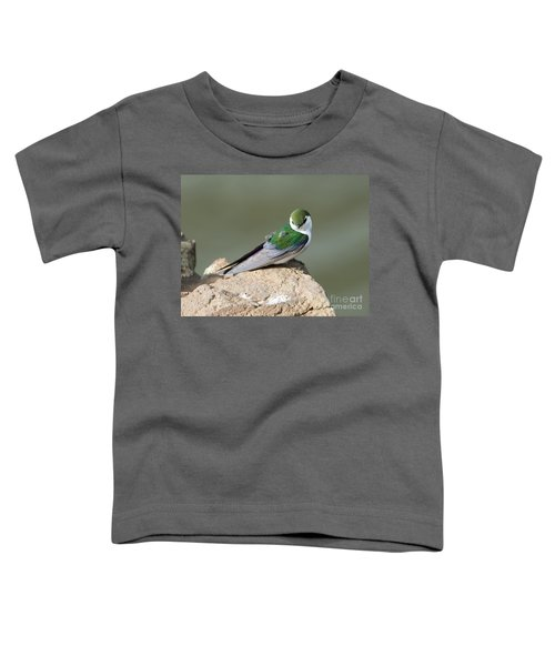 Violet-green Swallow Toddler T-Shirt by Mike Dawson