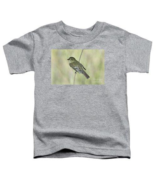 Acadian Flycatcher Toddler T-Shirt by Anthony Mercieca