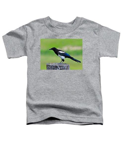 Black Billed Magpie Toddler T-Shirt by Karon Melillo DeVega
