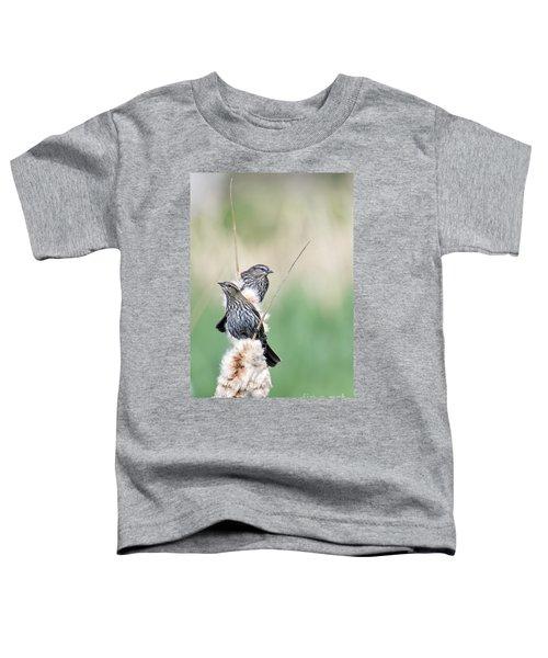 Blackbird Pair Toddler T-Shirt by Mike  Dawson