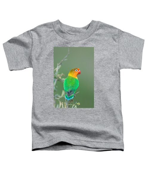 Close-up Of A Fischers Lovebird Toddler T-Shirt by Panoramic Images