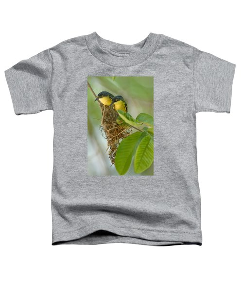 Close-up Of Two Common Tody-flycatchers Toddler T-Shirt by Panoramic Images