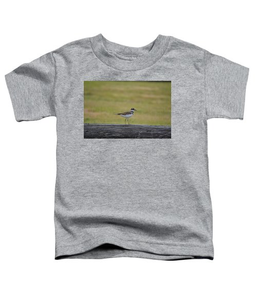 Killdeer Toddler T-Shirt by James Petersen