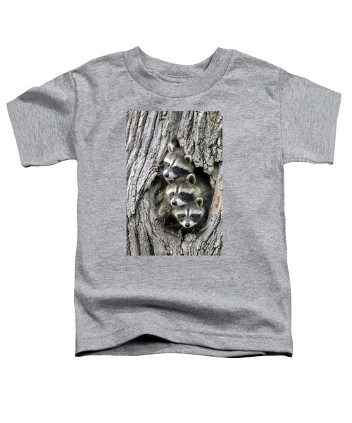 Raccoon Trio At Den Minnesota Toddler T-Shirt by Jurgen & Christine Sohns