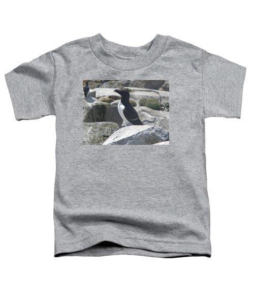 Razorbill Toddler T-Shirt by James Petersen