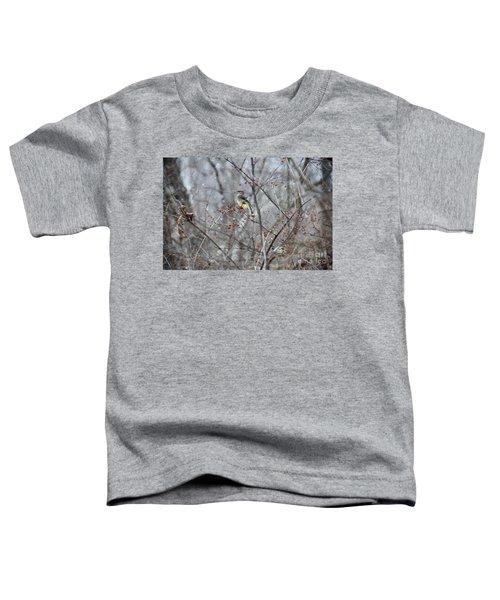 Cedar Wax Wing 3 Toddler T-Shirt by David Arment
