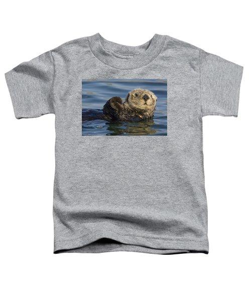 Sea Otter Monterey Bay California Toddler T-Shirt by Suzi Eszterhas