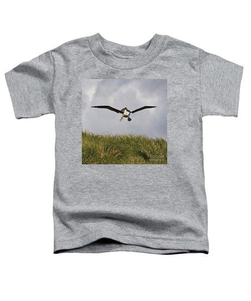 Black-browed Albatross Toddler T-Shirt by Jean-Louis Klein & Marie-Luce Hubert