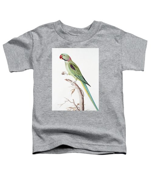 Alexandrine Parakeet Toddler T-Shirt by Nicolas Robert