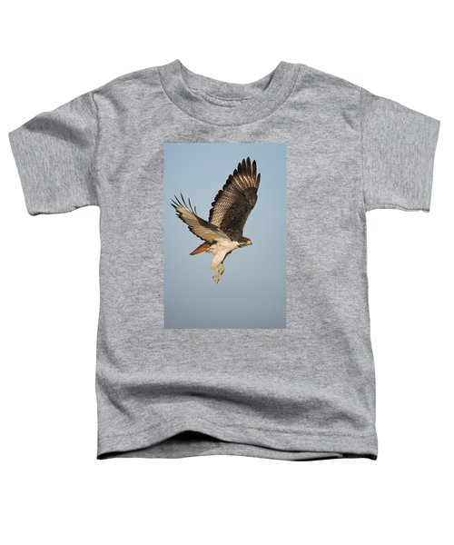 Augur Buzzard Buteo Augur Flying Toddler T-Shirt by Panoramic Images