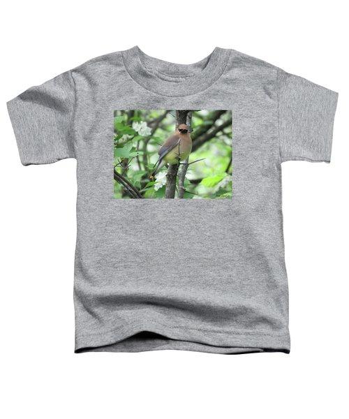 Cedar Wax Wing Toddler T-Shirt by Alison Gimpel