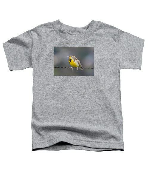 Meadowlark On Barbed Wire Toddler T-Shirt by Marc Crumpler