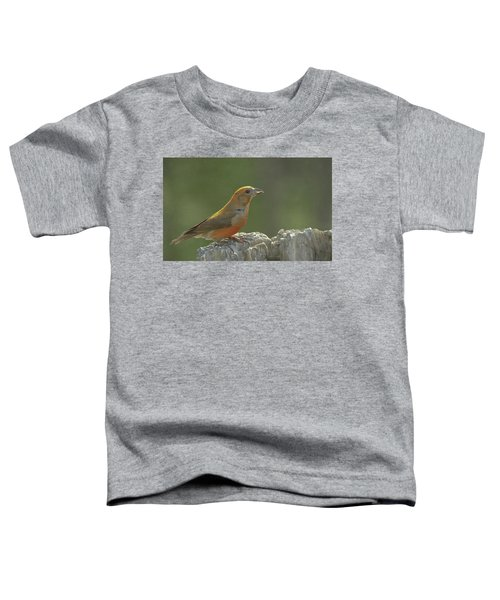 Red Crossbill Toddler T-Shirt by Constance Puttkemery