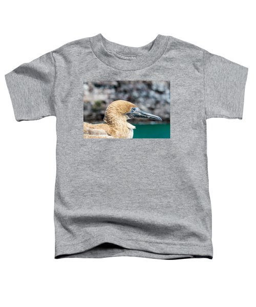 Red Footed Booby Juvenile Toddler T-Shirt by Jess Kraft