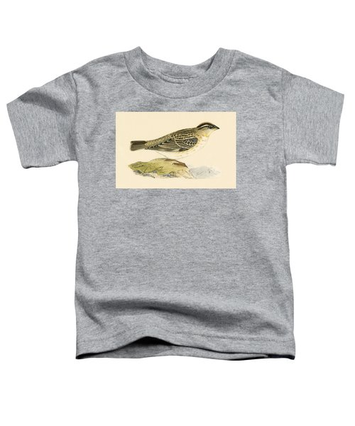Rock Sparrow Toddler T-Shirt by English School