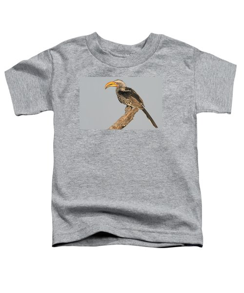 Southern Yellow-billed Hornbill Tockus Toddler T-Shirt by Panoramic Images