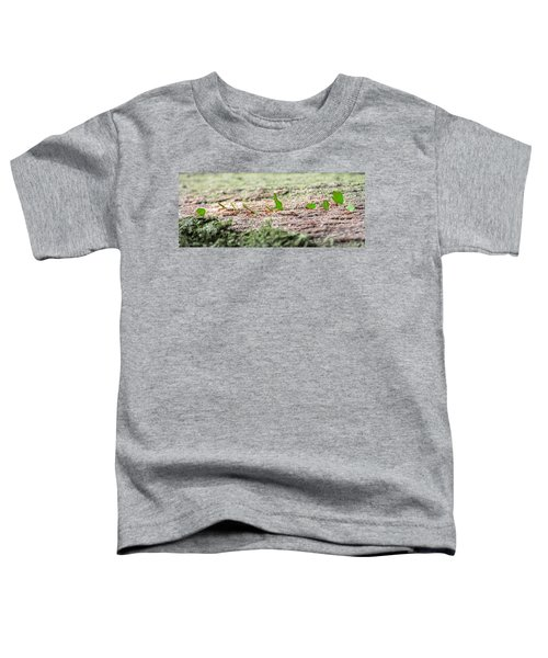 The Leaf Parade  Toddler T-Shirt by Betsy Knapp