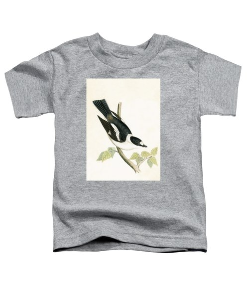 White Collared Flycatcher Toddler T-Shirt by English School