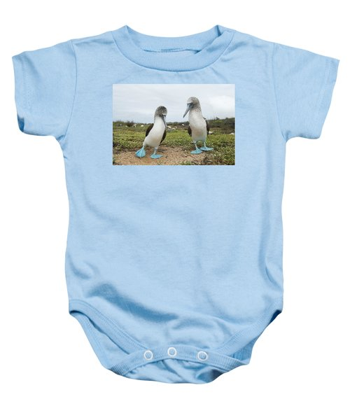 Blue-footed Booby Pair Courting Baby Onesie by Tui De Roy