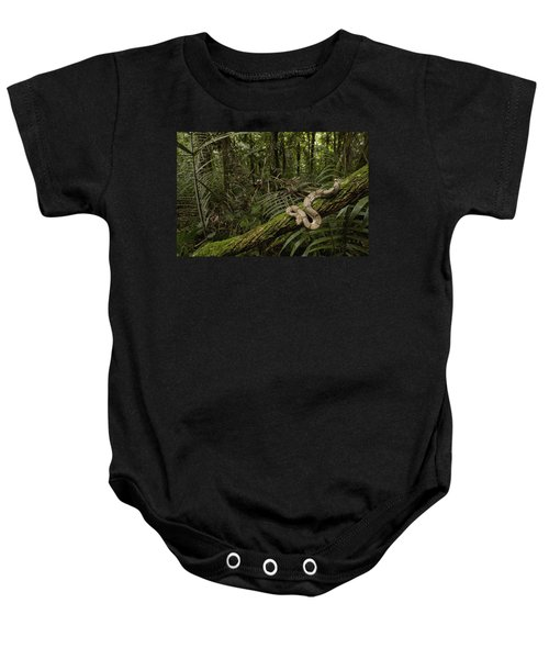 Boa Constrictor Boa Constrictor Coiled Baby Onesie by Pete Oxford