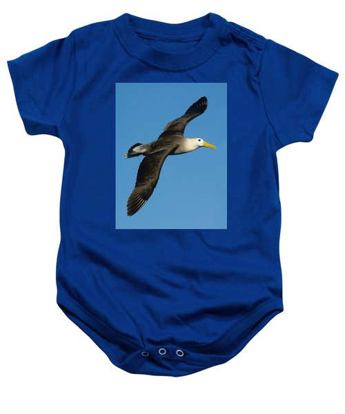 Waved Albatross Diomedea Irrorata Baby Onesie by Panoramic Images