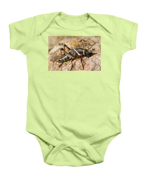 A Colorful Lubber Grasshopper Baby Onesie by Jack Goldfarb