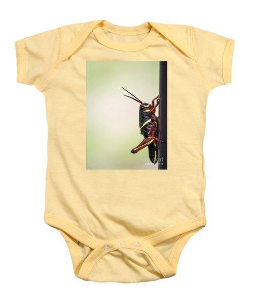 Giant Eastern Lubber Grasshopper Baby Onesie by Edward Fielding