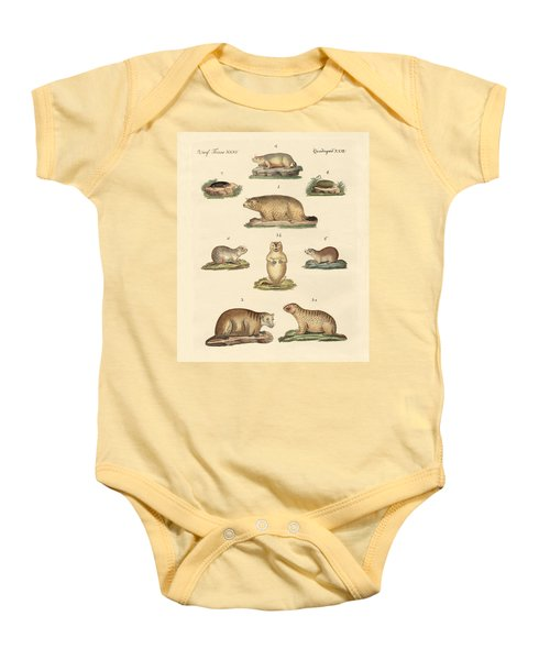Marmots And Moles Baby Onesie by Splendid Art Prints