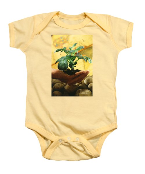 Potato Plant Baby Onesie by Science Source