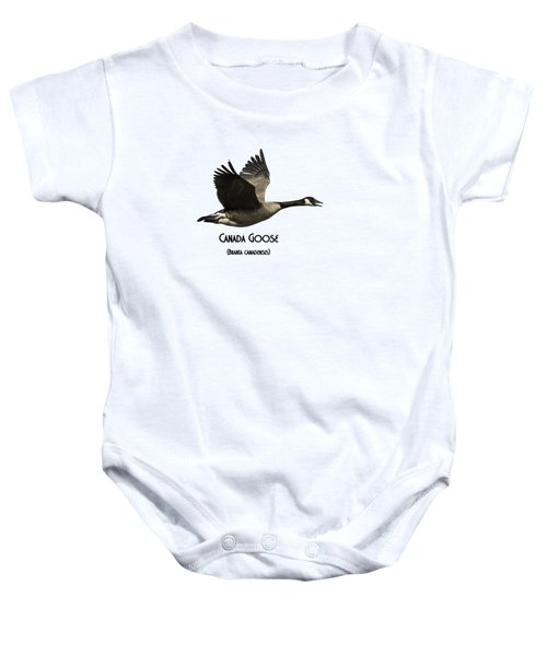 Isolated Canada Goose 2015-1 Baby Onesie by Thomas Young