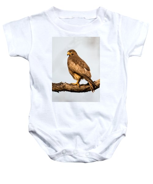 White-eyed Buzzard Butastur Teesa Baby Onesie by Panoramic Images