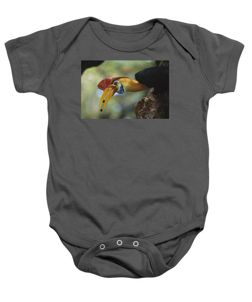 Sulawesi Red-knobbed Hornbill Male Baby Onesie by Tui De Roy