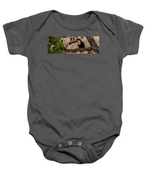 Close-up Of Tocu Toucan Ramphastos Toco Baby Onesie by Panoramic Images