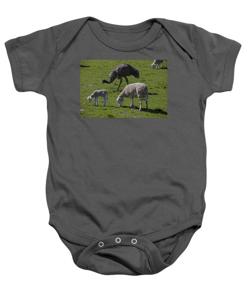 Emu And Sheep Baby Onesie by Garry Gay