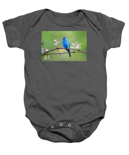 Indigo Bunting Perched Baby Onesie by Bill Wakeley