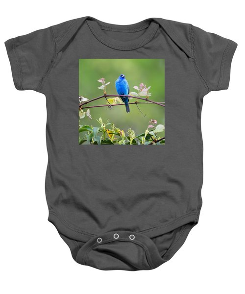 Indigo Bunting Perched Square Baby Onesie by Bill Wakeley