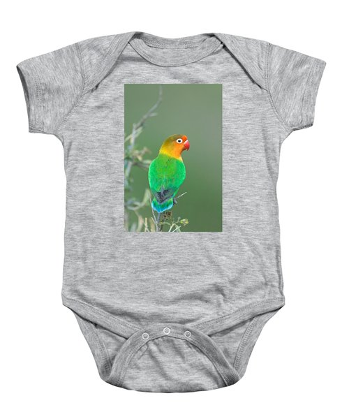 Close-up Of A Fischers Lovebird Baby Onesie by Panoramic Images